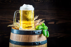 Cold and fresh beer in glass with hops and wheat Stock Image
