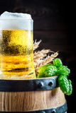 Cold and fresh beer in glass with wheat and hops Royalty Free Stock Images