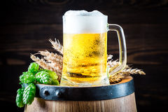 Cold and fresh beer with hops and wheat Royalty Free Stock Photo
