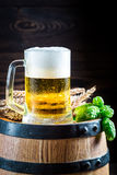 Cold and fresh beer with wheat and hops Royalty Free Stock Photos
