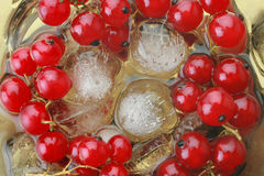Cold fresh dessert red currant berry with an ice Royalty Free Stock Photography