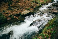 Cold, fresh mountain river in forest in Carpathian Mountains.  stock photography
