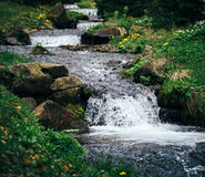 Cold, fresh mountain river in forest, it`s source is the lake Synevyr in Carpathian Mountains Royalty Free Stock Photo