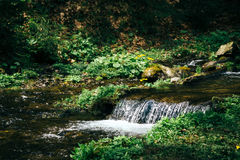 Cold fresh mountain stream surrounded by forest, sunlight Royalty Free Stock Photos
