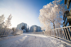 Cold fresh winter morning Stock Photography