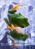Cold Frog Royalty Free Stock Photos