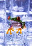 Cold frog royalty free stock photography