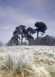 Cold frosty day landscape Royalty Free Stock Image