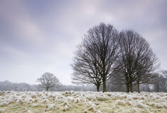 Cold frosty day landscape Royalty Free Stock Photo