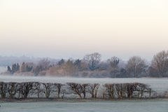 Cold and frosty morning Royalty Free Stock Photo
