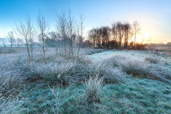 Cold frosty sunrise over marsh Royalty Free Stock Images