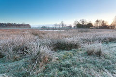 Cold frosty sunrise over swamp Royalty Free Stock Image