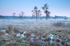 Cold frosty sunrise on swamp Royalty Free Stock Photography