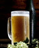 Cold frothy beer in glass, bottle and hops on a wooden background Royalty Free Stock Images