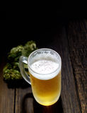 Cold frothy beer in a glass and hops on a dark wooden background. Cold frothy beer in a glass  and hops Stock Photos