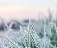 A Cold Hard Frost on blades of grass Royalty Free Stock Image