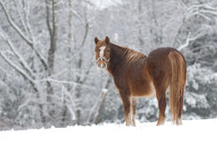 Cold Horse Stock Image