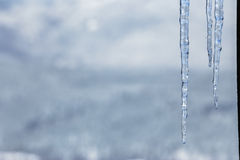 Cold icicles of clear ice Royalty Free Stock Image