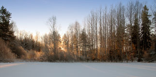 A cold January morning. The winter has taken the forest in a cold gripp Stock Photos