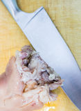 Cold jelly meat. Preparation cold jelly meat based dish of pork feet, beef and turkey Royalty Free Stock Images