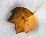 Cold leaf Stock Image