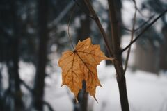 Cold Leaf Royalty Free Stock Image