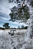 Cold lonely desolated bench. Snowy bench under the tree in the early morning in december with a blue sky and trees covered with snow countyside in the Royalty Free Stock Photography