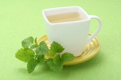Cold mint tea Royalty Free Stock Photos