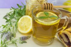 Cold mint tea with lemon on a table with mint plant Royalty Free Stock Image