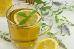 Cold mint tea with lemon on a table with mint plant Royalty Free Stock Images
