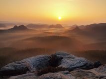 Cold misty daybreak in a fall valley of German park Royalty Free Stock Photos