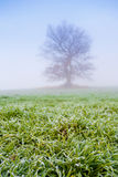 Cold misty morning with tree Stock Images
