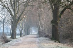 A cold misty road on a cold winter morning. With trees royalty free stock photography