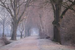 A cold misty road on a cold winter morning. With trees stock photography