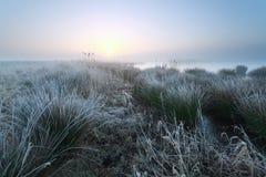 Cold misty sunrise on swamp Royalty Free Stock Photography