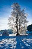Cold morning. Snow covered tree in beautiful norwegian winter landscape Stock Image