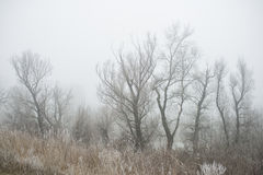 Cold morning in the forest. Misty winter morning in the forest royalty free stock photos