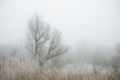 Cold morning in the forest. Misty winter morning in the forest stock images