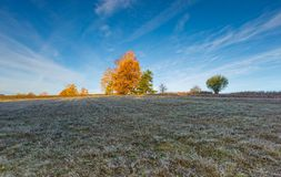 Cold morning on meadow with hoarfrost on plants Royalty Free Stock Photography