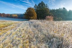 Cold morning on meadow with hoarfrost on plants Royalty Free Stock Photos