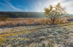 Cold morning on meadow with hoarfrost on plants Royalty Free Stock Photo