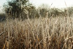 Cold morning of November. The first ground frosts decorated the withering field plants stock photos