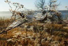 Cold morning of November. The first ground frosts decorated the withering field plants stock photo