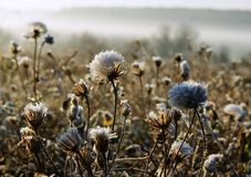 Cold morning of November. The first ground frosts decorated the withering field plants royalty free stock images