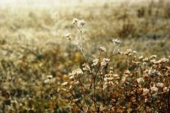 Cold morning of November. The first ground frosts decorated the withering field plants royalty free stock photos