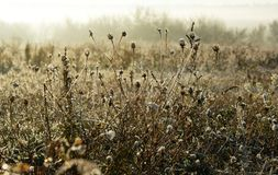 Cold morning of November. The first ground frosts decorated the withering field plants stock images