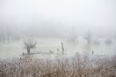 Cold morning in the swamp. Misty winter morning in the swamp Royalty Free Stock Images