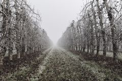 Fruit trees covered by ice during the winter on Lleida Spain. Morning frost on fruit trees. Cold morning on winter in a rural landscape in Lleida Spain royalty free stock photo