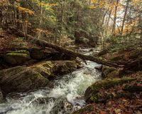 Cold mountain brook royalty free stock photography