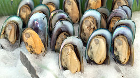 Cold new zealand mussels Royalty Free Stock Image